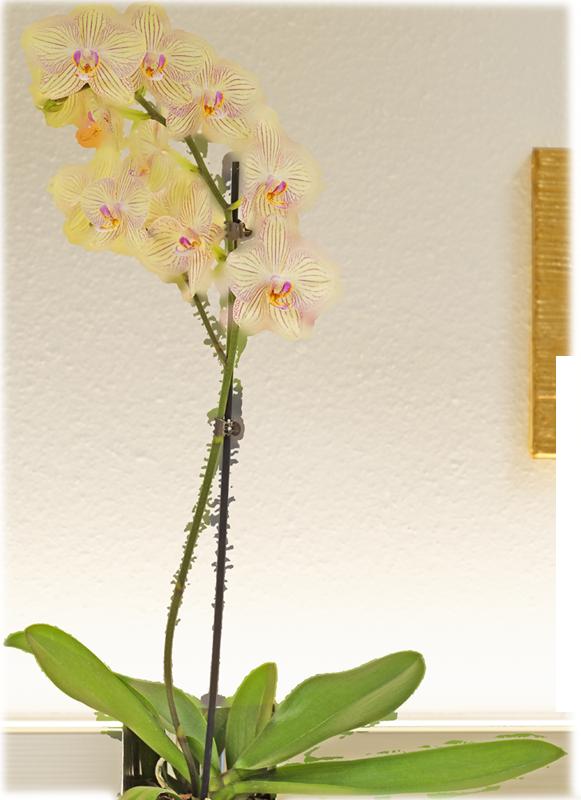 orchidee Hintergrund